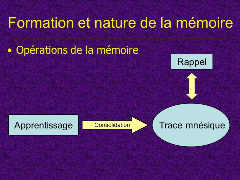 Différentes phases de la mémoire Formation et nature de la mémoire Opérations de la mémoire 1 essai dapprentissage MMT (3 heures … et plus) 3/5 essais dapprentissage MLT (à partir de 24 heures)