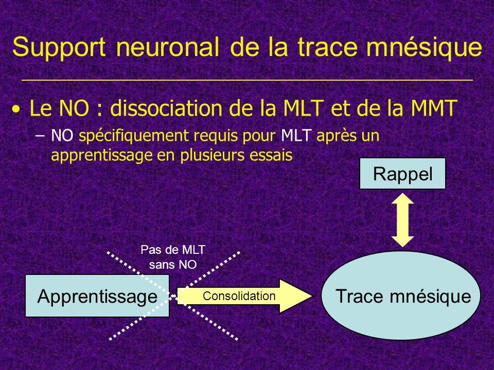 Conclusions Mêmes résultats pour lapprentissage olfactif Dissociation de différentes formes de mémoire –Mécamylamine : une seule stimulation (apprentissage en un essai, rappel) –α-bungarotoxine, MLA et L-NAME : plusieurs stimulations (formation de la MLT) –Différents récepteurs nicotiniques –Couplage des récepteurs nicotiniques avec la NO-synthase