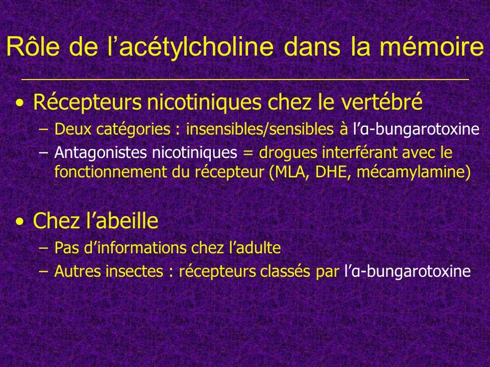 Mécamylamine et α-bungarotoxine Apprentissage en 1 essai (MMT) La mécamylamine bloque lapprentissage en 1 essai, mais pas la consolidation ; lα-bungarotoxine na pas deffet