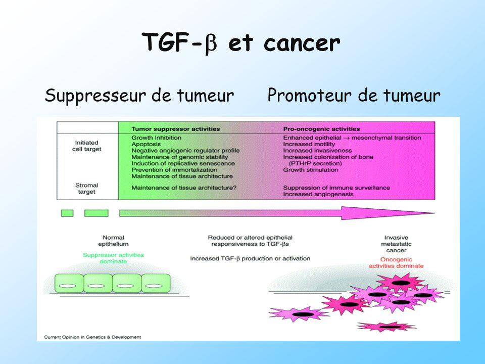 Proliférationcellulaire Expression de la matrice extracellulaire Apoptose Régulation de lhoméostasie des lymphocytes Différenciationcellulaire VasculogénèseAngiogénèse TGF - : Cytokine multifonctionnelle TGF - From Marion Bourgeade