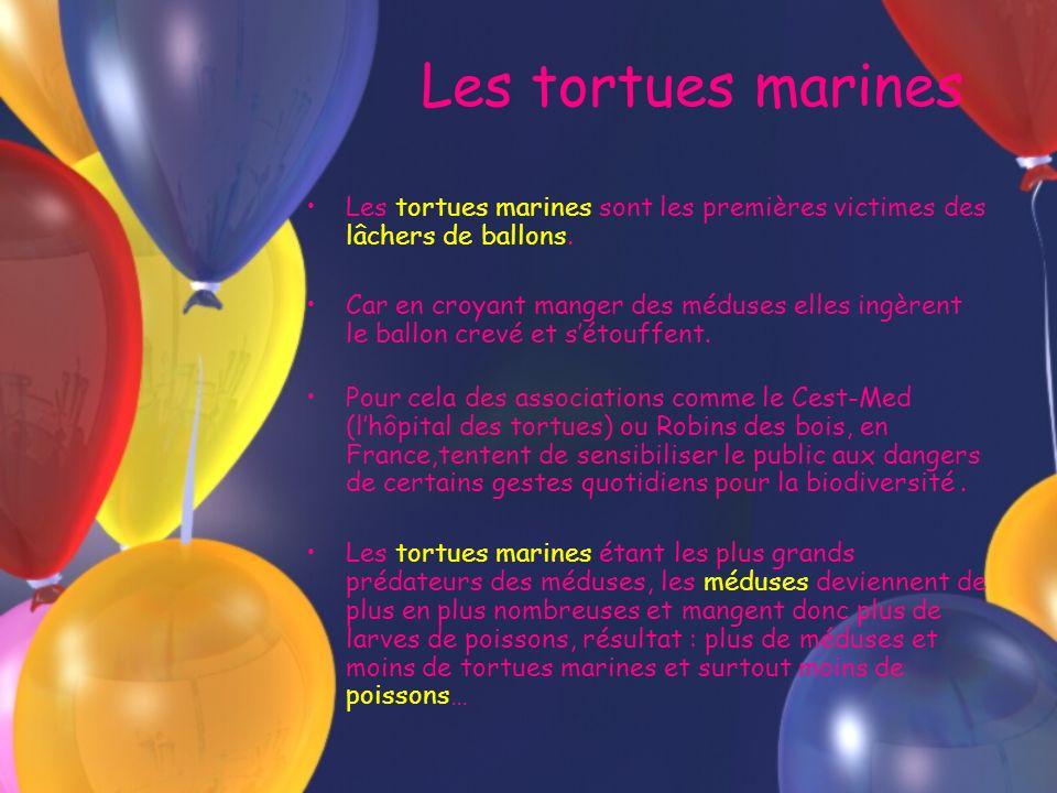 Les tortues marines Les tortues marines sont les premières victimes des lâchers de ballons. Car en croyant manger des méduses elles ingèrent le ballon