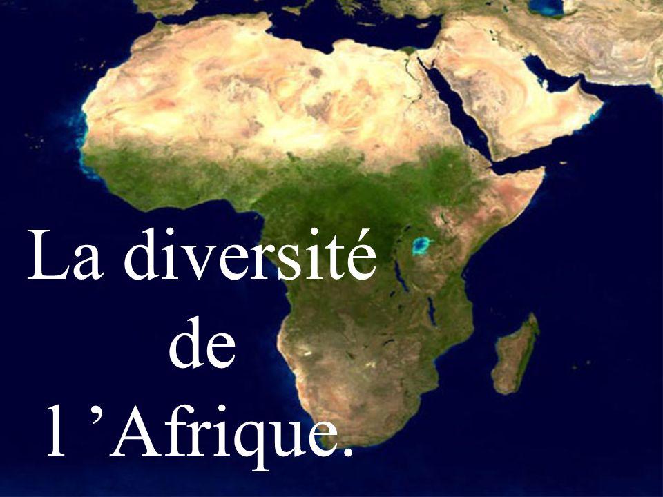 La diversité de l Afrique.