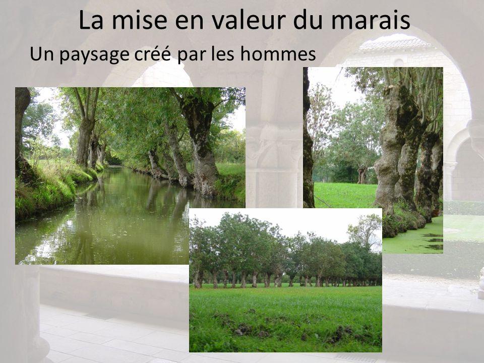 La mise en valeur du marais Un paysage créé par les hommes