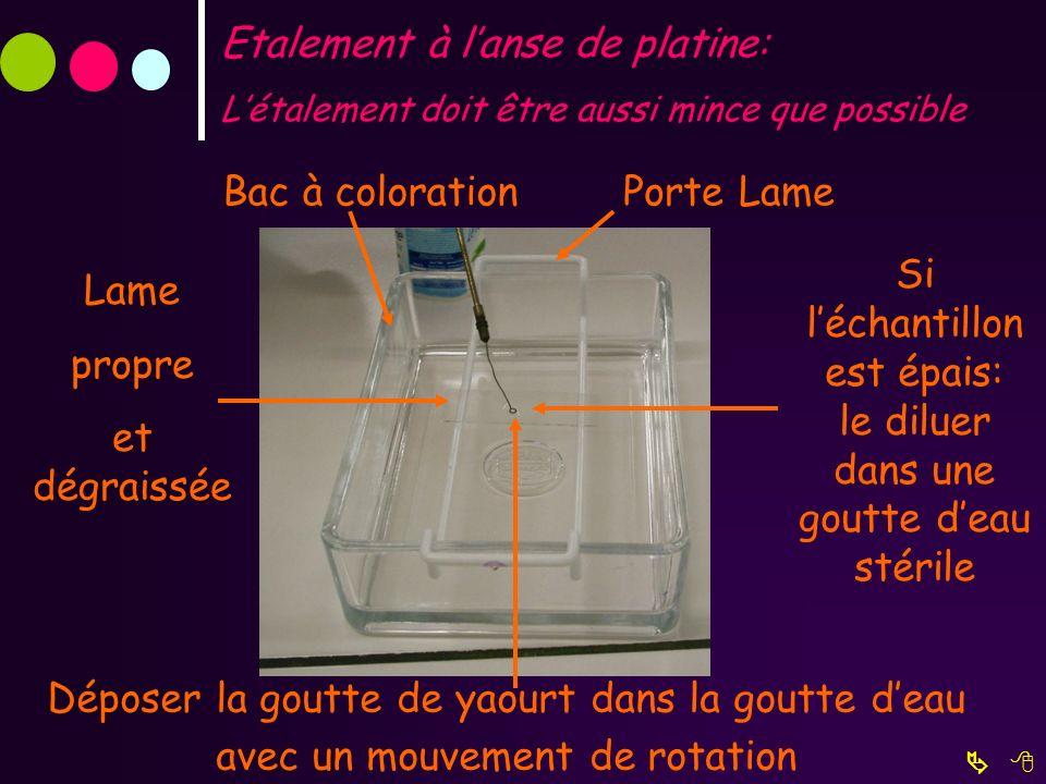 Etalement à lanse de platine: Létalement doit être aussi mince que possible Déposer la goutte de yaourt dans la goutte deau avec un mouvement de rotat