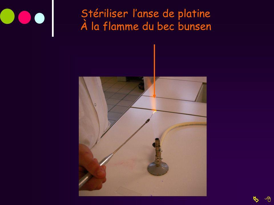 Stériliser lanse de platine À la flamme du bec bunsen