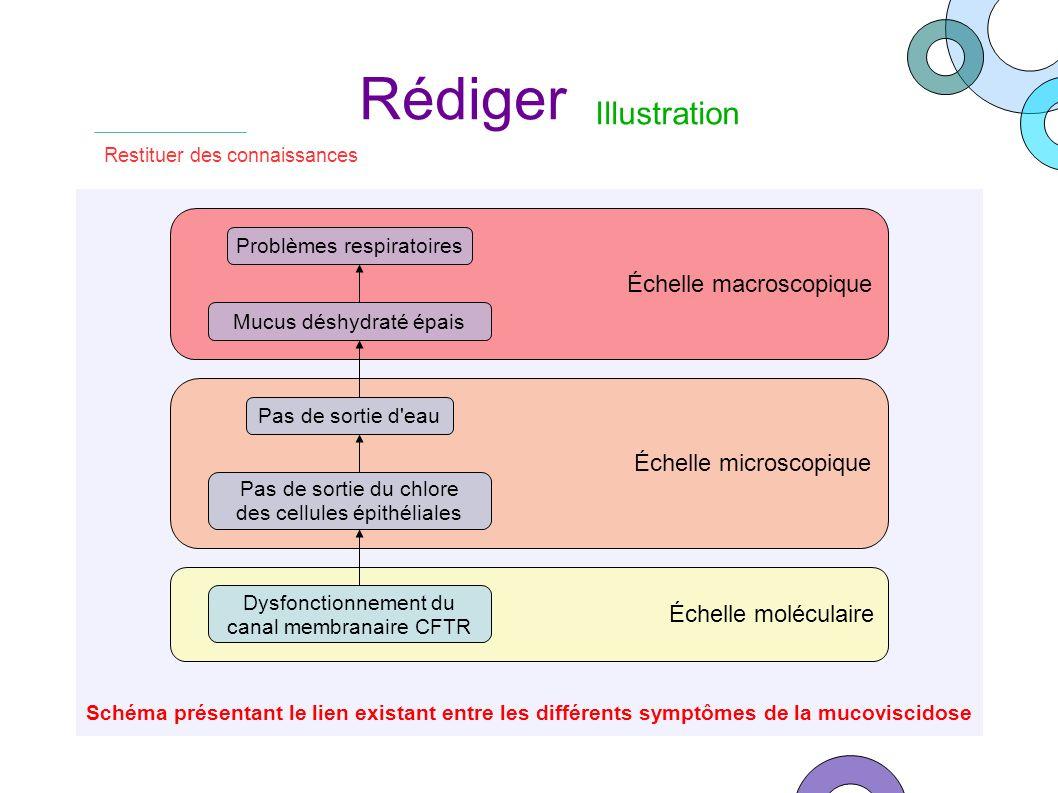 Schéma présentant le lien existant entre les différents symptômes de la mucoviscidose Échelle macroscopique Restituer des connaissances Rédiger Illust