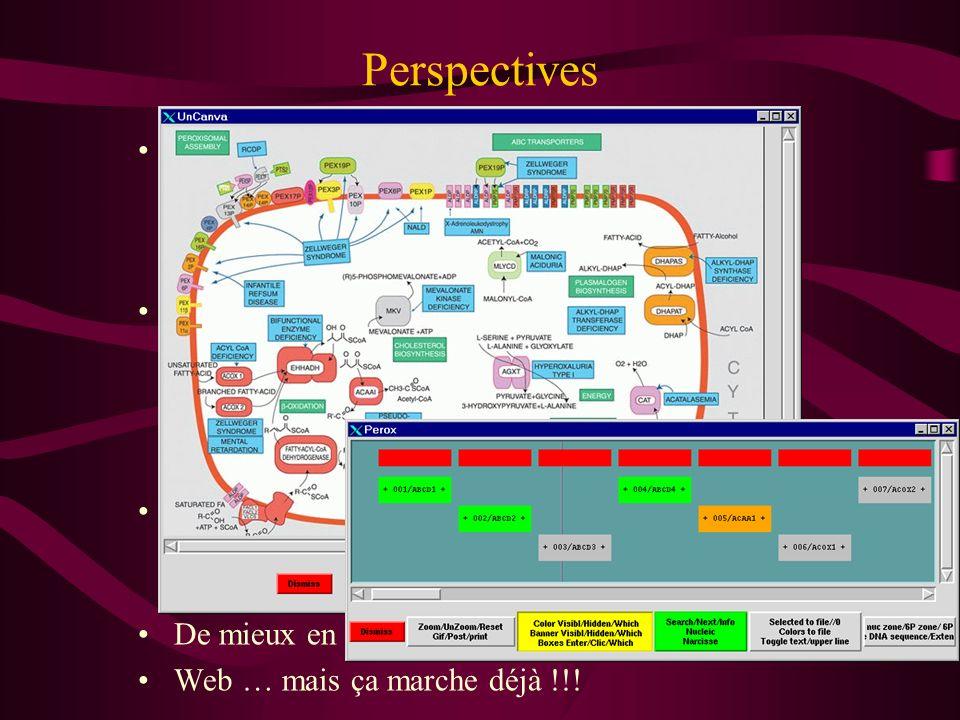 Perspectives Eucaryotes supérieurs –mauvais épissage –intégration des Est –étude promoteurs Informations sur les domaines et motifs –Ballast –Correlat