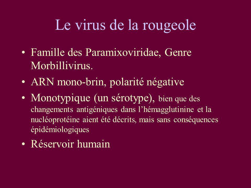 Le virus de la rougeole Famille des Paramixoviridae, Genre Morbillivirus. ARN mono-brin, polarité négative Monotypique (un sérotype), bien que des cha
