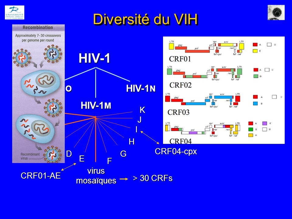 Génotypage sur DSS RNA extraction RT-PCR (env) JC Plantier et al., AIDS 2005 - 460 bp Séquençage Analyse phylogénétique 302 échantillons sélectionnées: 100 M 168 NT Plupart récents.