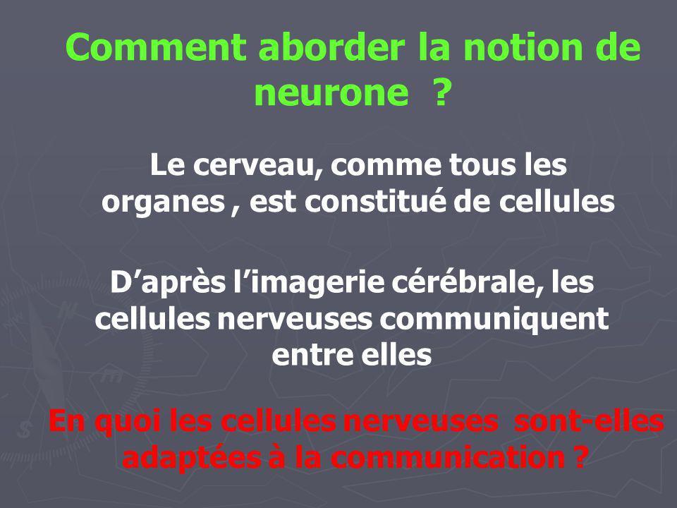 Observation de cellules au microscope Observation de réseaux de cellules Les cellules nerveuses, ou neurones, présentent de nombreux prolongements et établissent des contacts entre elles ; elles sont adaptées à la communication