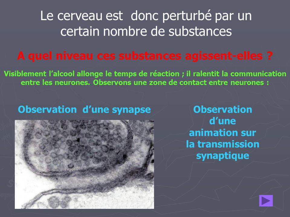 Le cerveau est donc perturbé par un certain nombre de substances A quel niveau ces substances agissent-elles ? Observation dune synapseObservation dun