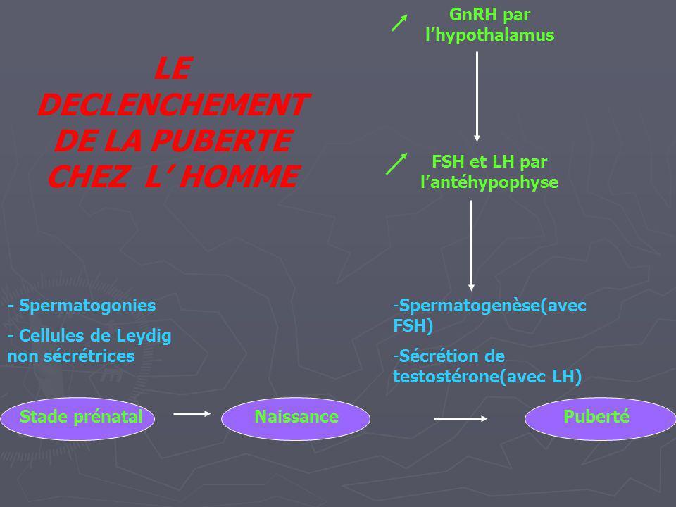 Follicules primordiaux 1200 000 GnRH par lhypothalamus FSH et LH par lantéhypophyse Développement des follicules ( 250 000 au départ) : début des cycles Stade prénatal Follicules primordiaux et primaires 400 000 NaissancePuberté LE DECLENCHEMENT DE LA PUBERTE CHEZ LA FEMME