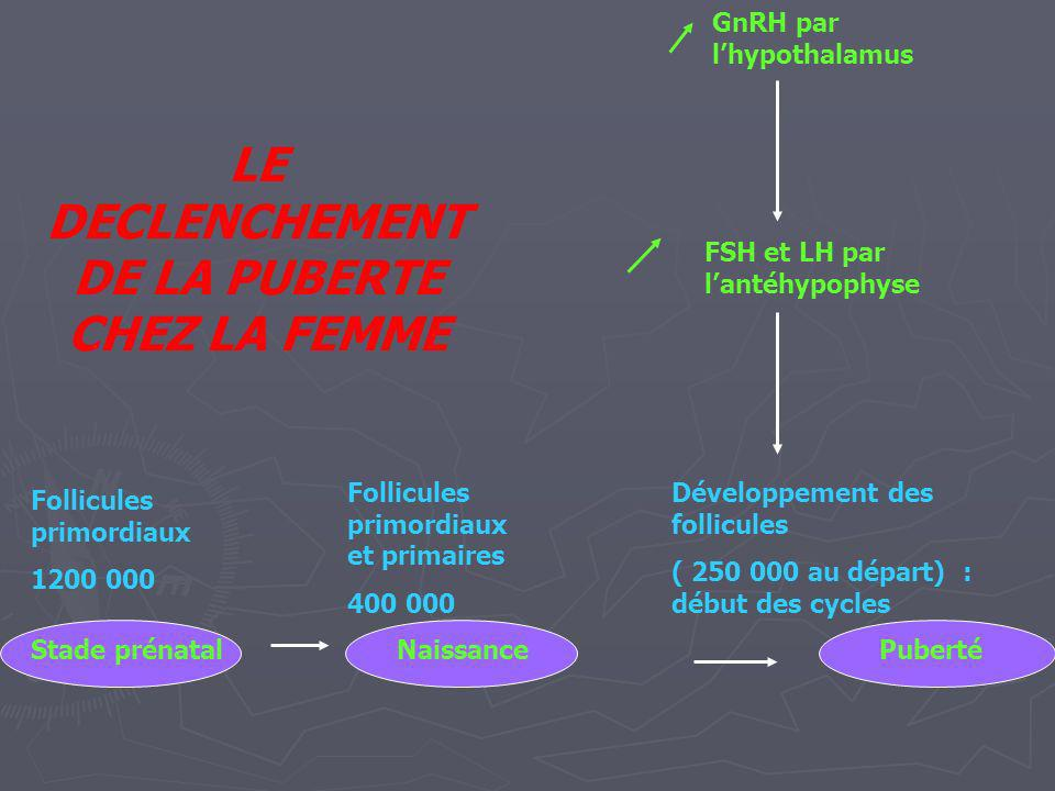 Follicules primordiaux 1200 000 GnRH par lhypothalamus FSH et LH par lantéhypophyse Développement des follicules ( 250 000 au départ) : début des cycl