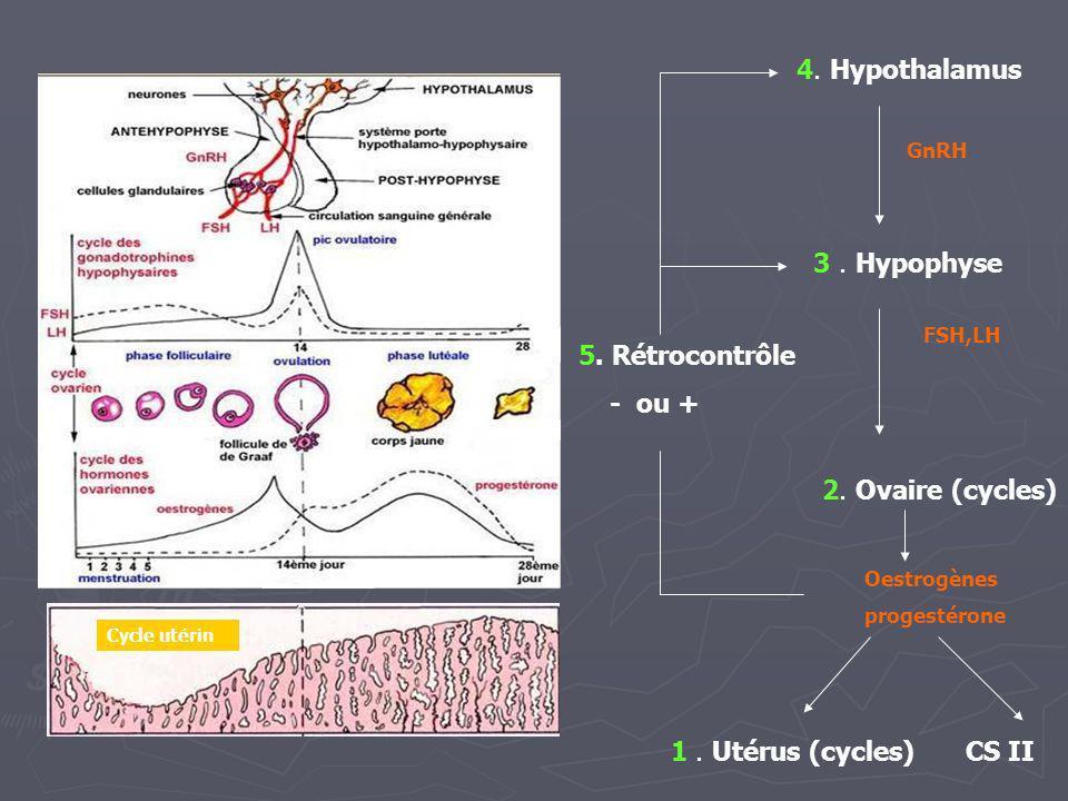 Cycle utérin 1. Utérus (cycles) 2. Ovaire (cycles) 3. Hypophyse 4. Hypothalamus 5. Rétrocontrôle - ou + Oestrogènes progestérone FSH,LH GnRH CS II