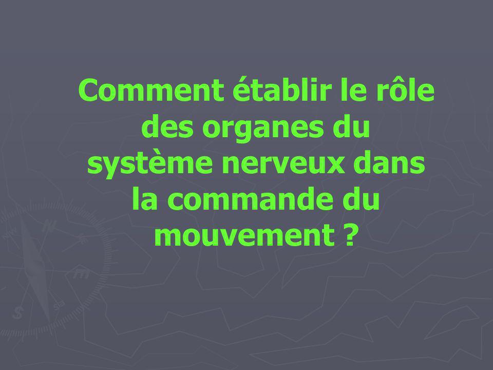 Comment établir le rôle des organes du système nerveux dans la commande du mouvement ?