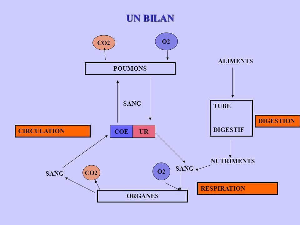 UN BILAN POUMONS COEUR TUBE DIGESTIF ORGANES ALIMENTS SANG DIGESTION NUTRIMENTS O2 CO2 O2 CO2 CIRCULATION RESPIRATION SANG