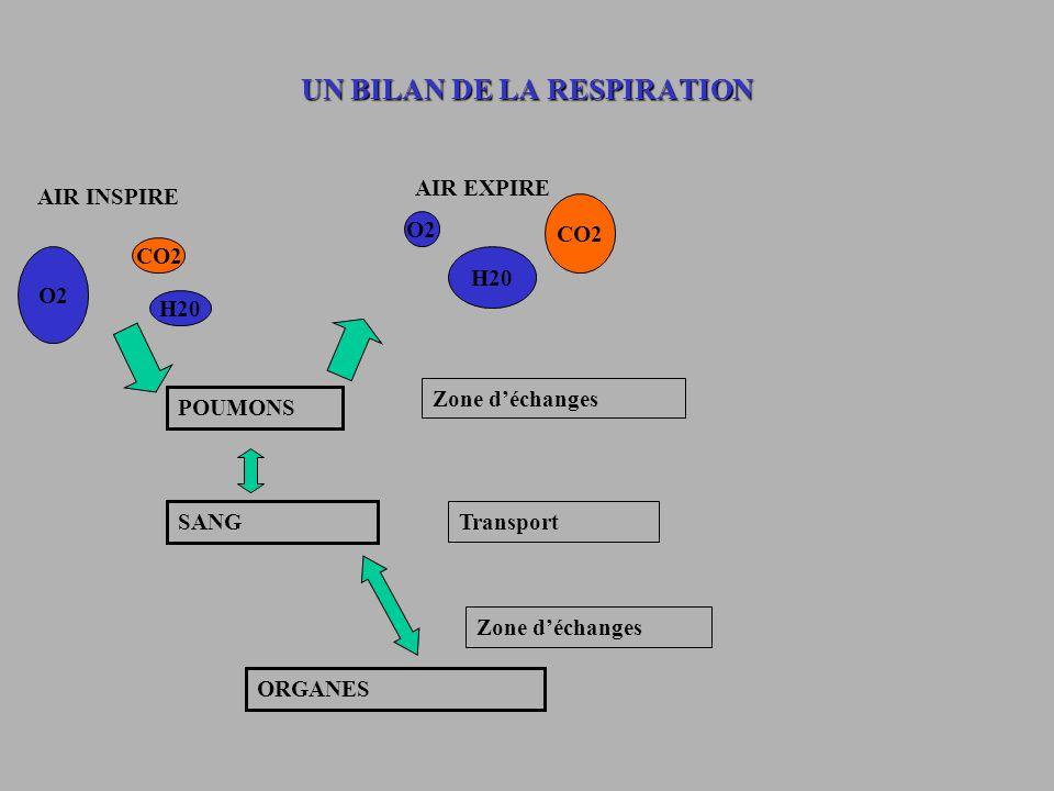 UN BILAN DE LA RESPIRATION AIR INSPIRE AIR EXPIRE O2 CO2 H20 O2 CO2 H20 POUMONS Zone déchanges SANG ORGANES Transport Zone déchanges