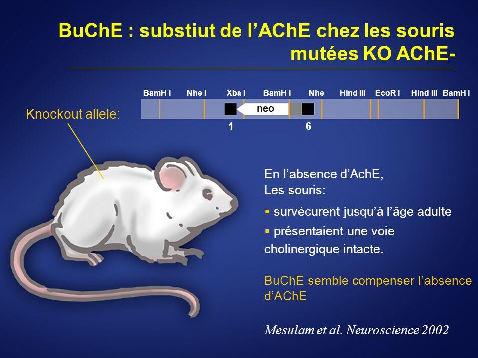 BuChE : substiut de lAChE chez les souris mutées KO AChE- En labsence dAchE, Les souris: survécurent jusquà lâge adulte présentaient une voie choliner