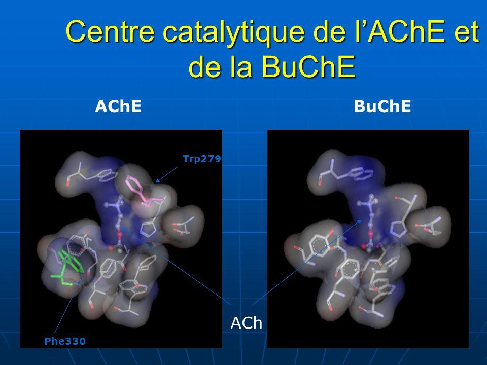 Centre catalytique de lAChE et de la BuChE BuChEAChE Trp279 Phe330 ACh