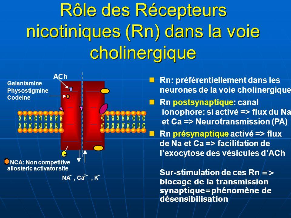 ACh P NA +, Ca 2+, K + NCA: Non competitive allosteric activator site Galantamine Physostigmine Codeine Rn: préférentiellement dans les neurones de la