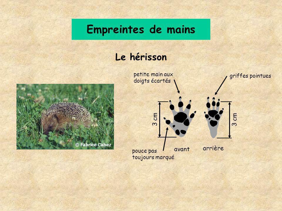 Le hérisson Empreintes de mains 3 cm griffes pointues avant arrière pouce pas toujours marqué petite main aux doigts écartés
