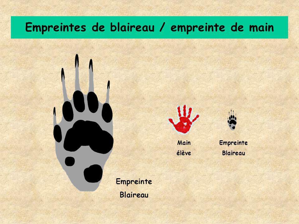Empreintes de blaireau / empreinte de main Main élève Empreinte Blaireau Empreinte Blaireau
