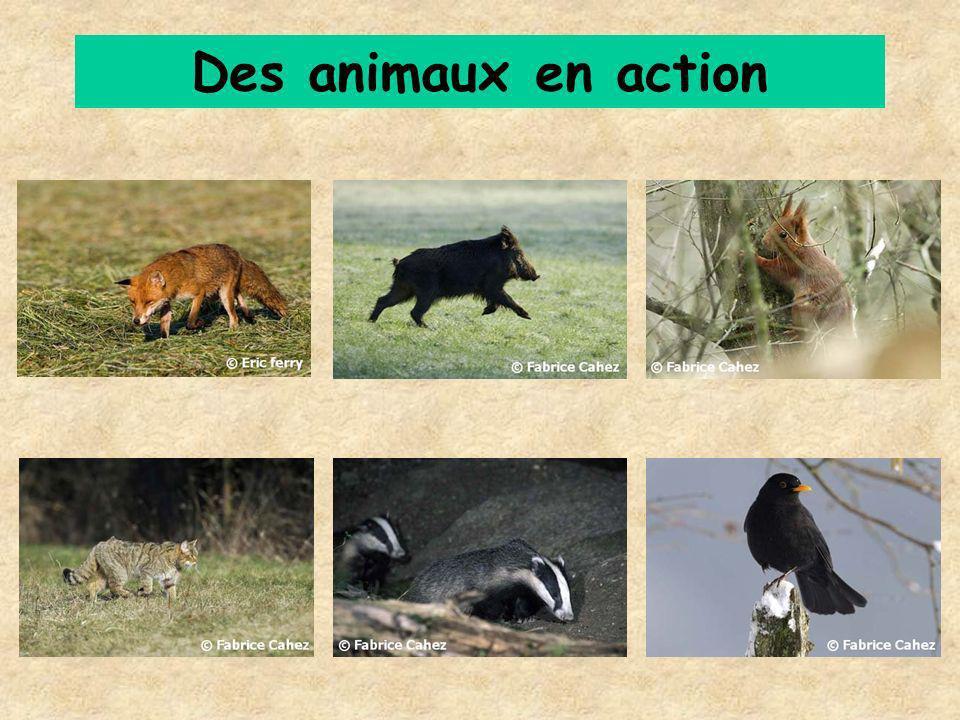 Des animaux en action