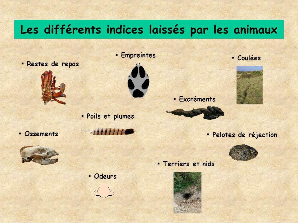 Les différents indices laissés par les animaux Restes de repas Empreintes Excréments Poils et plumes Pelotes de réjection Ossements Terriers et nids C