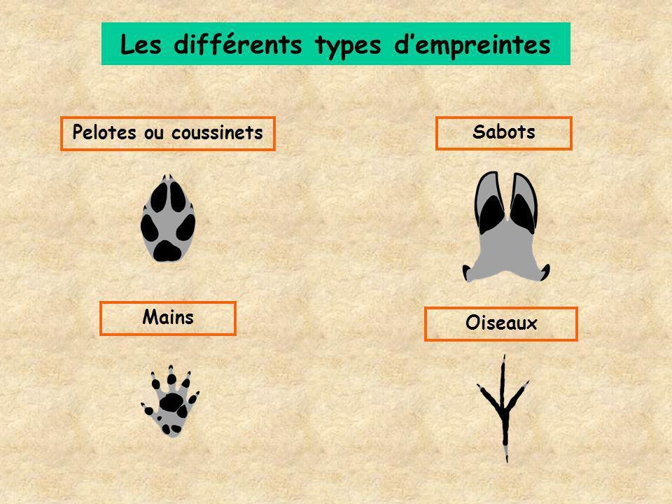 Les différents types dempreintes OiseauxPelotes ou coussinetsSabotsMains