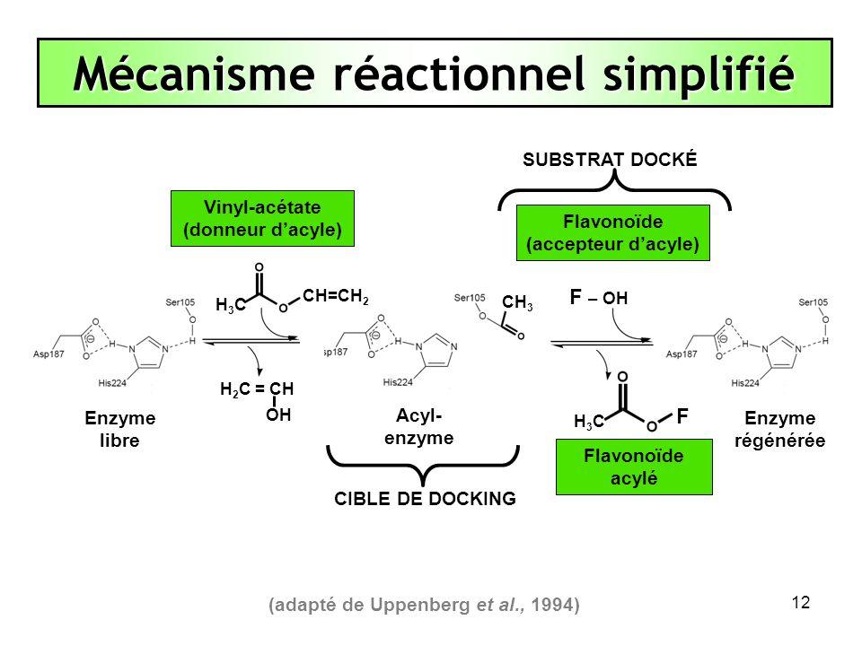12 Mécanisme réactionnel simplifié (adapté de Uppenberg et al., 1994) Enzyme libre CIBLE DE DOCKING SUBSTRAT DOCKÉ Flavonoïde (accepteur dacyle) F H3C