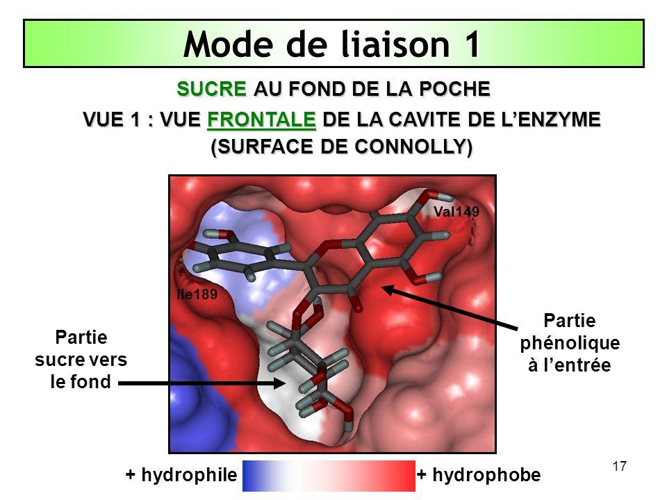 17 Mode de liaison 1 SUCRE AU FOND DE LA POCHE + hydrophobe+ hydrophile VUE 1 : VUE FRONTALE DE LA CAVITE DE LENZYME (SURFACE DE CONNOLLY) Partie phén