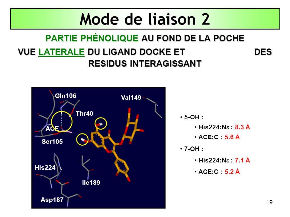 19 Mode de liaison 2 PARTIE PHÉNOLIQUE AU FOND DE LA POCHE VUE LATERALE DU LIGAND DOCKE ET DES RESIDUS INTERAGISSANT Thr40 His224 Asp187 Ile189 Val149