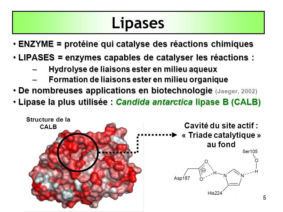 5 ENZYME = protéine qui catalyse des réactions chimiques ENZYME = protéine qui catalyse des réactions chimiques LIPASES = enzymes capables de catalyse