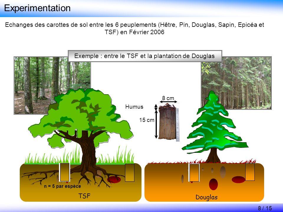 Experimentation Echanges des carottes de sol entre les 6 peuplements (Hêtre, Pin, Douglas, Sapin, Epicéa et TSF) en Février 2006 TSF Douglas 15 cm Hum