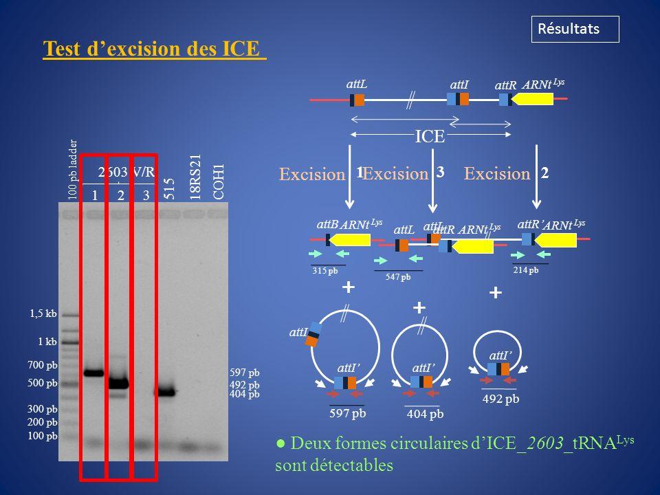 Test de transfert conjugatif Résultats Souche donatrice : Souche réceptrice : COH1 Rif R Str R A909 Rif R Str R Nem316 Rif R Str R ICE_515_tRNA Lys se transfère à une fréquence maximale de 4x10 -7 (+/- 0,9 x10 -8 ) transconjugants / cellule donatrice dans les conditions testées attL attR ARNt Lys attI attB ARNt Lys 515 Ery R attI