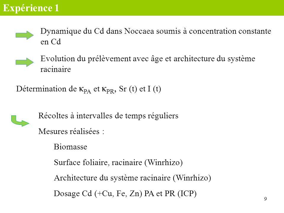 9 Récoltes à intervalles de temps réguliers Mesures réalisées : Biomasse Dosage Cd (+Cu, Fe, Zn) PA et PR (ICP) Architecture du système racinaire (Win