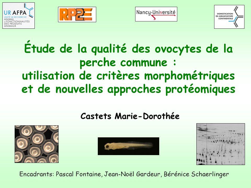 Étude de la qualité des ovocytes de la perche commune : utilisation de critères morphométriques et de nouvelles approches protéomiques Encadrants: Pas