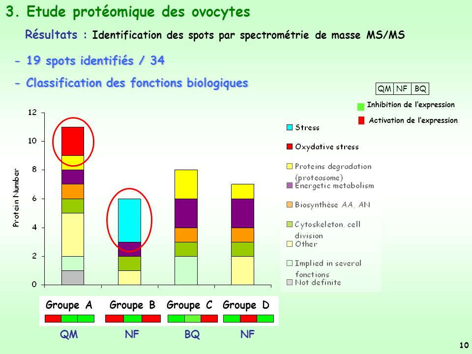Groupe A Groupe DGroupe BGroupe C QMNFBQ Inhibition de lexpression Activation de lexpression - Classification des fonctions biologiques 10 QMNFBQNF 3.