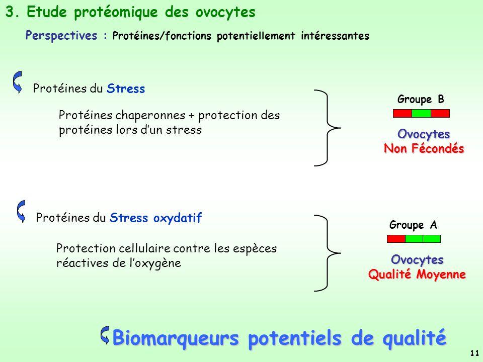 Protéines du Stress oxydatif Groupe A Protection cellulaire contre les espèces réactives de loxygène Protéines du Stress Groupe B Protéines chaperonnes + protection des protéines lors dun stress 3.