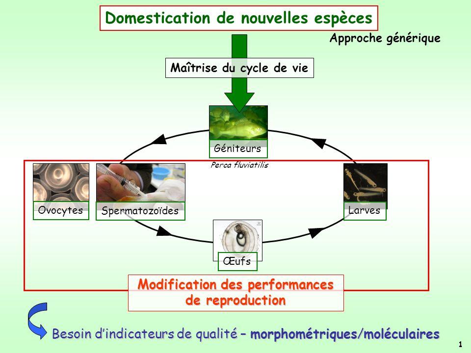 1 Géniteurs Œufs Ovocytes Spermatozoïdes Larves Domestication de nouvelles espèces Maîtrise du cycle de vie Besoin dindicateurs de qualité – morphomét