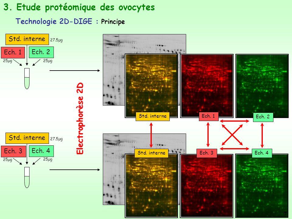 Std. interne Ech. 1 Ech. 2 Std. interne Ech. 3 Ech. 4 Electrophorèse 2D Std. interneEch. 1 Ech. 2 Std. interneEch. 3Ech. 4 25µg 3. Etude protéomique d