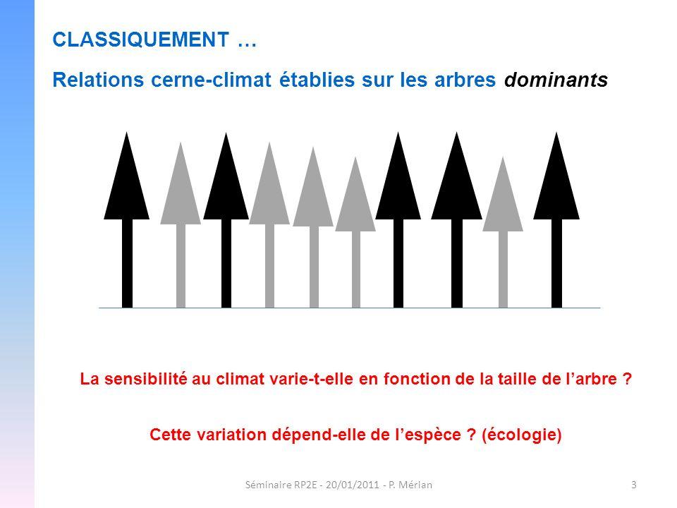 Séminaire RP2E - 20/01/2011 - P. Mérian3 CLASSIQUEMENT … Relations cerne-climat établies sur les arbres dominants La sensibilité au climat varie-t-ell