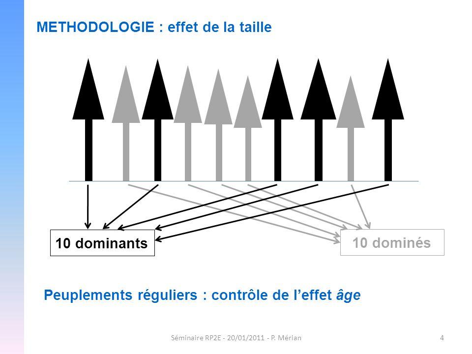 Séminaire RP2E - 20/01/2011 - P. Mérian4 METHODOLOGIE : effet de la taille 10 dominés 10 dominants Peuplements réguliers : contrôle de leffet âge