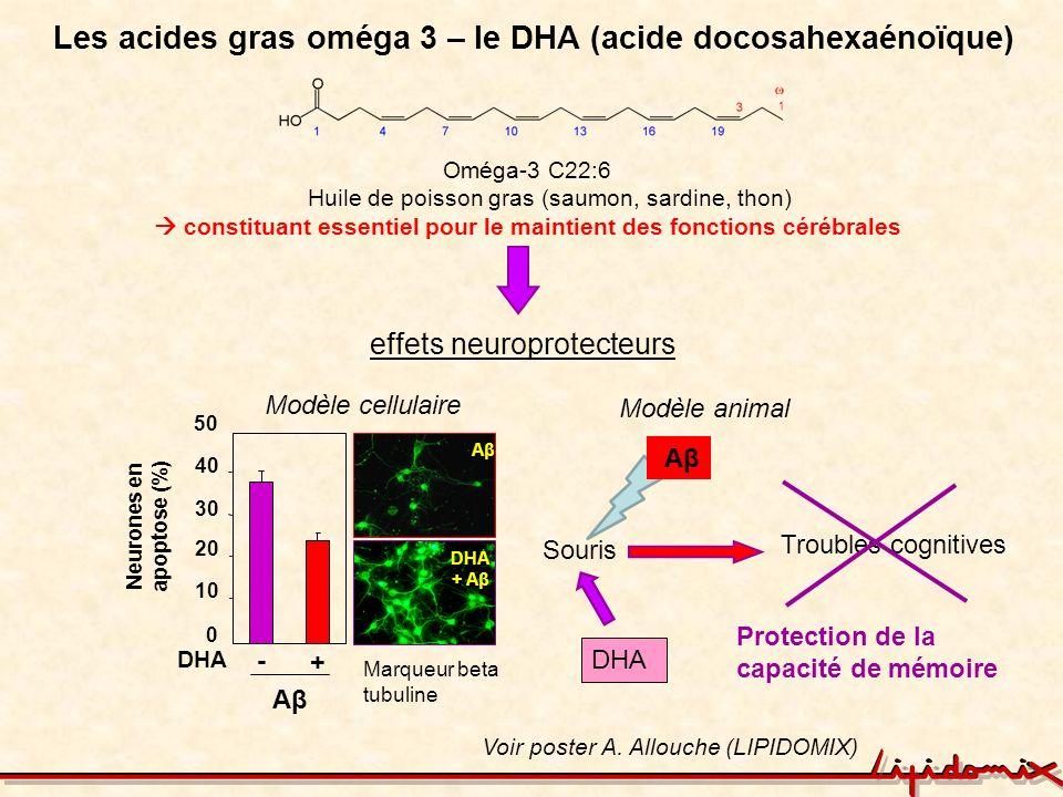 Les acides gras oméga 3 – le DHA (acide docosahexaénoïque) Neurones en apoptose (%) DHA - + Aβ 0 10 20 30 40 50 AβAβ DHA + Aβ Voir poster A. Allouche