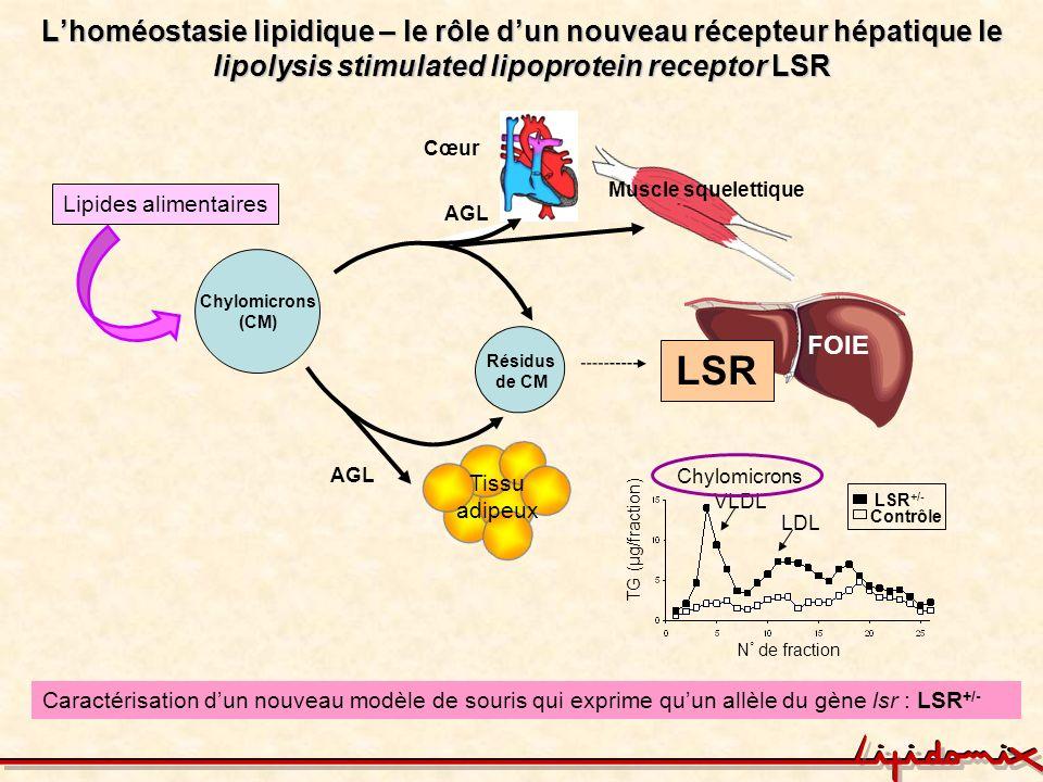 La souris LSR +/- un nouveau modèle animal de la dyslipidémie Temps (h) TG plasmatique (mg/dl) Repas LSR +/- Contrôle * ** *** clairance des lipides de la circulation lipides (triglycérides et cholestérol) dans le plasma masse corporelle et masse grasse avec lâge ou sous régime hyperlipidique Perte de lhoméostasie lipidique nouveau modèle de la dyslipidémie Yen et al, J.