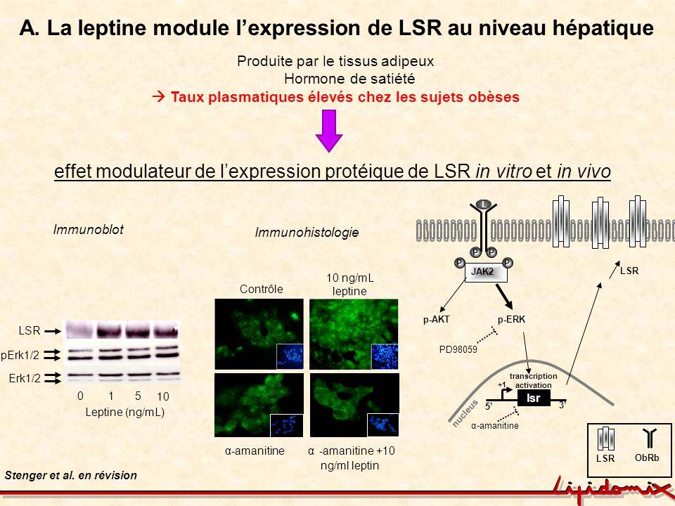 A. La leptine module lexpression de LSR au niveau hépatique Stenger et al. en révision Immunoblot 105 10 Leptine (ng/mL) LSR Erk1/2 pErk1/2 α-amanitin