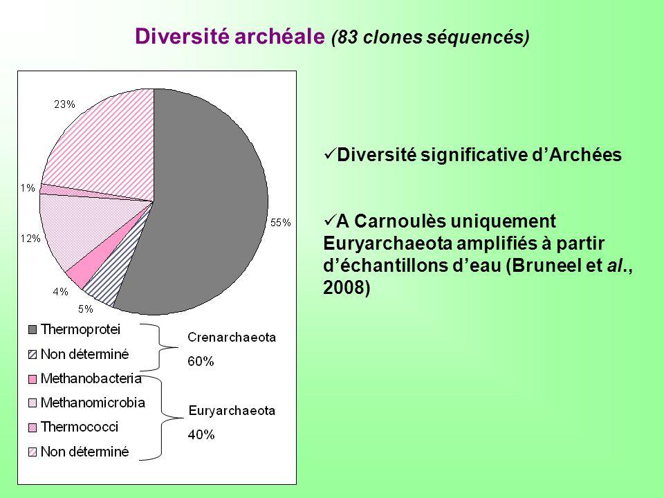 Diversité archéale (83 clones séquencés) Diversité significative dArchées A Carnoulès uniquement Euryarchaeota amplifiés à partir déchantillons deau (