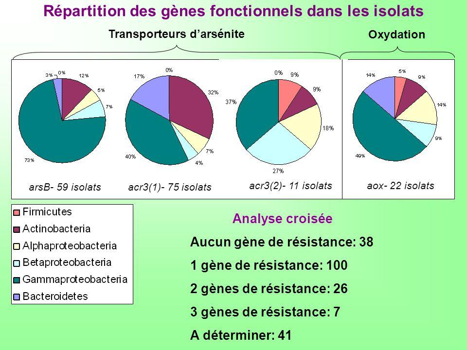 Répartition des gènes fonctionnels dans les isolats arsB- 59 isolatsacr3(1)- 75 isolats acr3(2)- 11 isolatsaox- 22 isolats Transporteurs darsénite Oxy