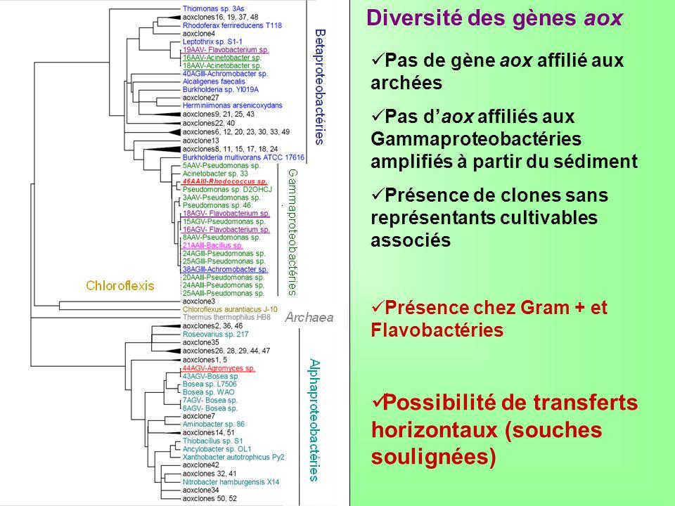 Diversité des gènes aox Pas de gène aox affilié aux archées Pas daox affiliés aux Gammaproteobactéries amplifiés à partir du sédiment Présence de clon