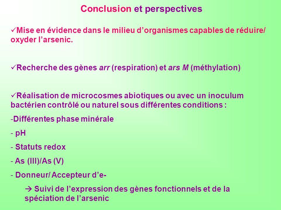 Conclusion et perspectives Mise en évidence dans le milieu dorganismes capables de réduire/ oxyder larsenic. Recherche des gènes arr (respiration) et